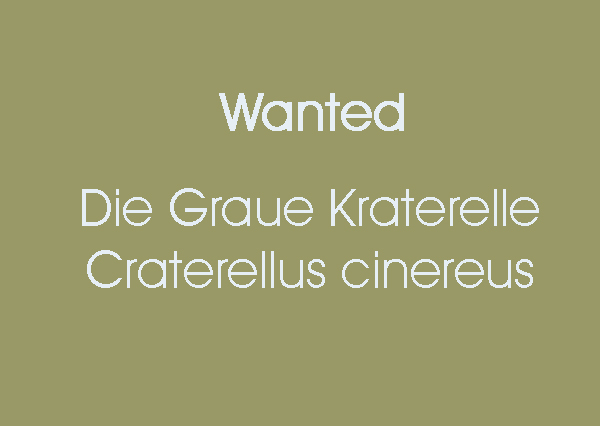 wanted-craterelle.jpg