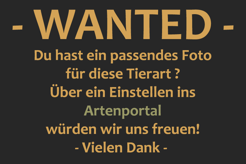 Wanted~1.jpg