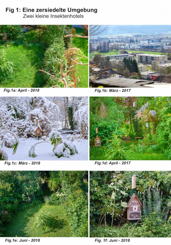 Ein kleiner Beitrag zur Biodiversität in einem urbanen, zersiedelten Gebiet, Teil 1 Leptorchestes berolinensis