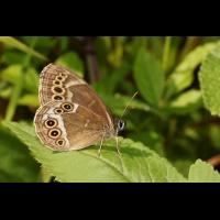 IMG_3730 (2)_filtered.jpg (butterfly 27)