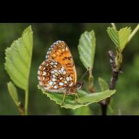 IMG_0779 (2)_edited_filtered.jpg (butterfly 27)