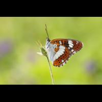 IMG_4708_edited_filtered.jpg (butterfly 27)