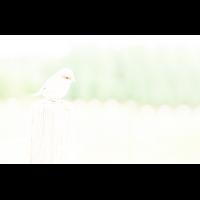 HHK_9730xxx7.jpg (Fietsche)