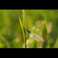 2021-08-27_06-19-23_P8270119_filtered_klein.jpg (bachprinz1)