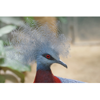 Vogel1_1.jpg (harai)