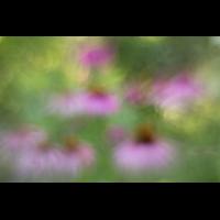 IMG_8050_1.8_1.200_200_Blueten_Garten.jpg (Gabi Buschmann)