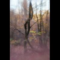 IMG_6537_3.5_1.100_200_Wald_Wildpark.jpg (Gabi Buschmann)