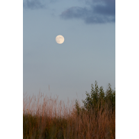 IMG_8909_11.0_1.40_200_Mond_KS.jpg (Gabi Buschmann)
