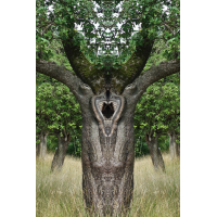 Baum_NS---Kopie.jpg (Gabi Buschmann)
