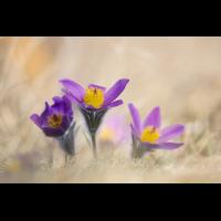 IMG_5719_3.5_1.jpg (Gabi Buschmann)