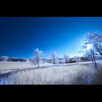 DSC09232 2.jpg (nurWolfgang)