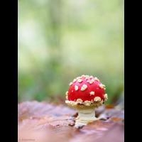 PA230246_Fliegenpilz_farbton_klein.jpg (Severus)