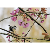 Frühling.jpg (haraldgall)