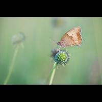 compOchsenauge9.7.2016MerishausenDSC_0255.jpg (caesch1)
