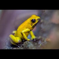 Gelbe Gefahr... (caesch1)