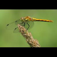 Libellenrätsel02_IMG_0848.jpg (der_kex)