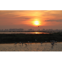 Camargue_Flamingos_IMG_4853.jpg (der_kex)