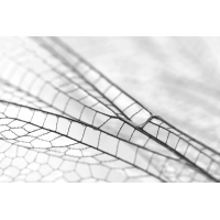 Libellenflügel_Strukturen_IMG_8114.jpg (der_kex)