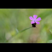 _DSF5663 1.jpg (Peterle-Oth)