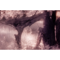 Naturform_.jpg (komet)