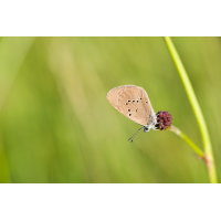 DSC_2956.jpg (Maring)