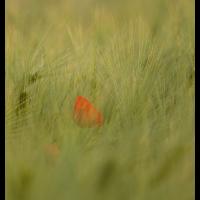 _MG_2645.jpg (Naturbeobachter)