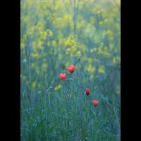 _MG_5242.jpg (Naturbeobachter)