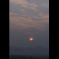 _MG_6614.jpg (Naturbeobachter)
