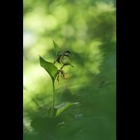 orchidee-43177.jpg (Freddie)