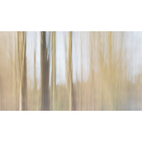 20180213_47---Kopie.jpg (Corela)