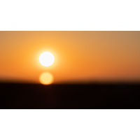 20180505_156---Kopie.jpg (Corela)