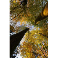 20141106_0123---Kopie.jpg (Corela)