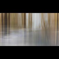 20180213_52---Kopie.jpg (Corela)