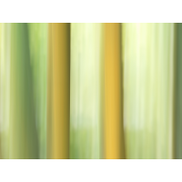 20190406_109---Kopie.jpg (Corela)