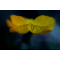 20190501_94---Kopie.jpg (Corela)