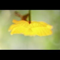 20190430_127---Kopie.jpg (Corela)