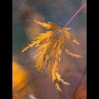Herbst 2-170011.JPG (laus1648)