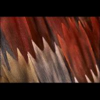Graphium policenes 1200.jpg (A_K)