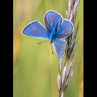 blauer02-(1-von-1).jpg (rincewind)