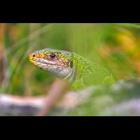 Smaragd1.jpg (Benjamin Tull)