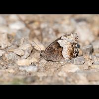 P7140119.jpg (fossilhunter)