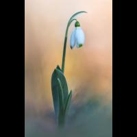 Frühling Teil III Kopie.jpg (schaubinio)