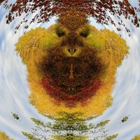 image3A11212_mirror2-1200.JPG (Sven A.)