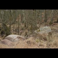Gneis mit Kräuselmoos.jpg (Ajott)