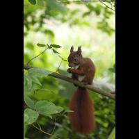 Eichhörnchen01bwmakro.jpg (Ajott)