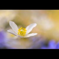 DSC_1431 - Kopie.jpg (frank66)