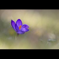DSC_9618.jpg (g.j.)
