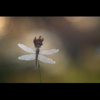 libelle5_top.jpg (derflo)