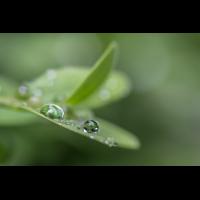 IMG_9891_.jpg (Harmonie)