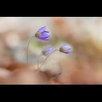 IMG_6592_.jpg (Harmonie)